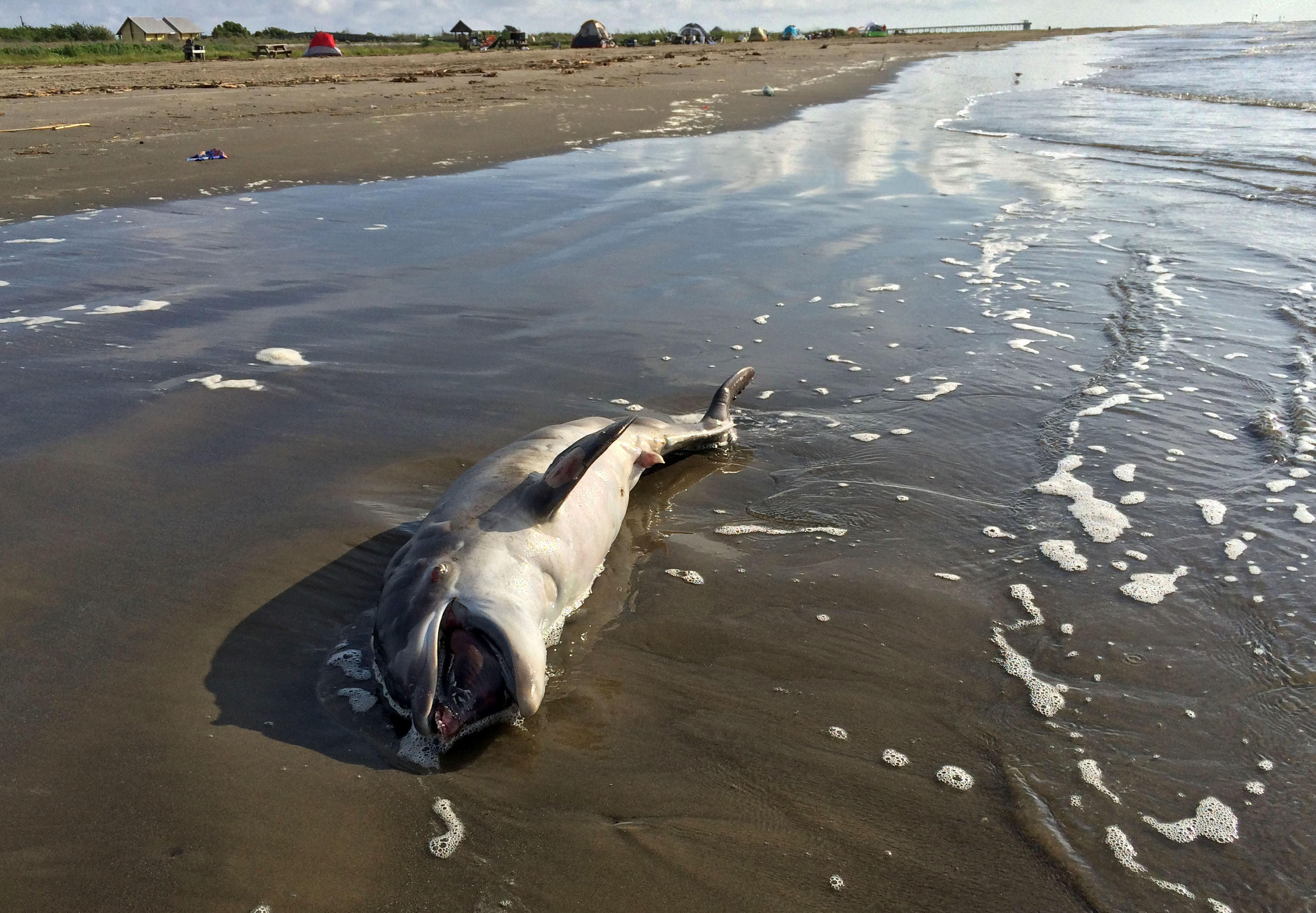 gulf oil spill houma courier
