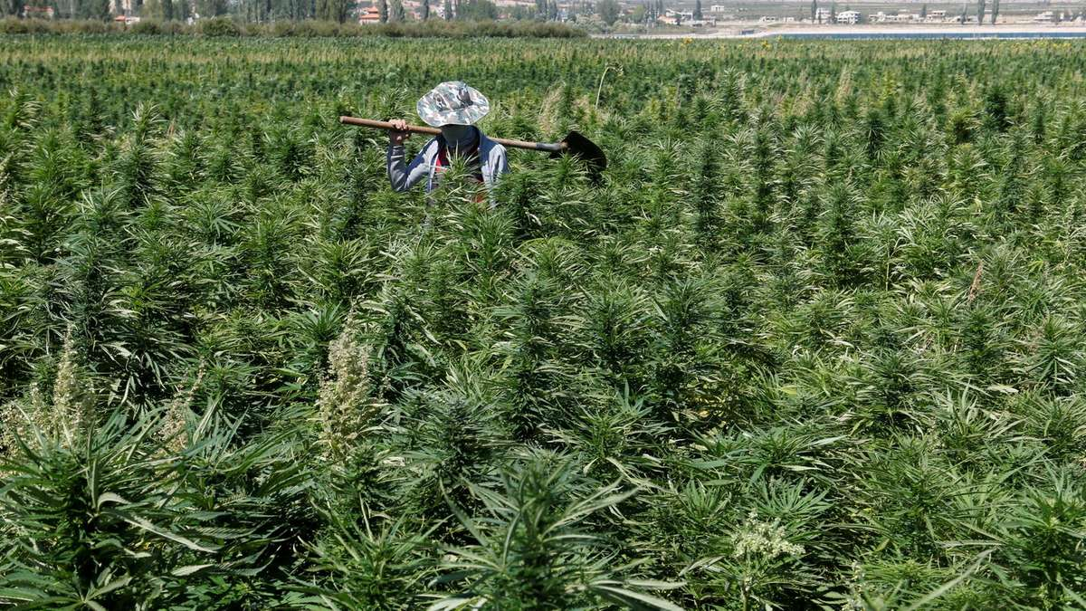 lebanon corruption relaxing cannabis laws