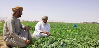 Oman Agriculture news