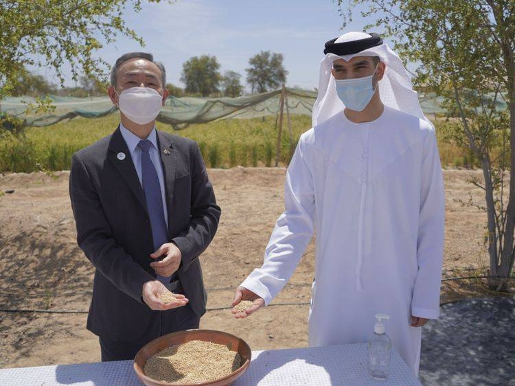 uae saudi zeyoudi desert bclimate
