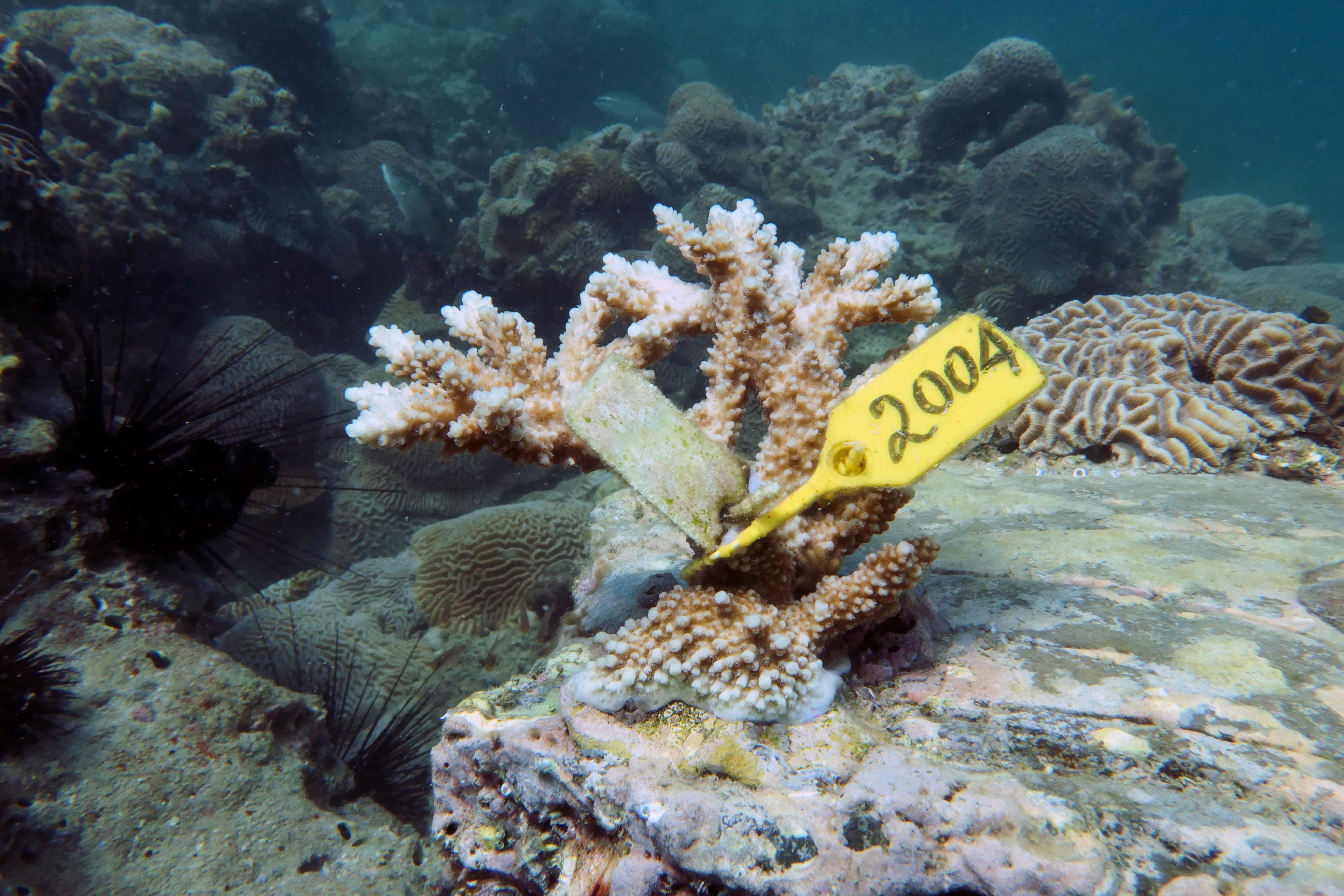 uae divers coral reef bclimate