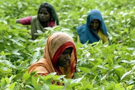 india soybean farmers rains output